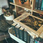 """książka """"Wehikuł czasu"""" na tle biblioteczki, obok niej kot"""
